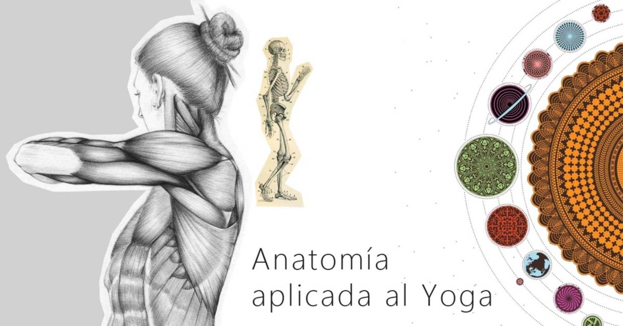 Hermosa Anatomía De Panis Componente - Anatomía de Las Imágenesdel ...